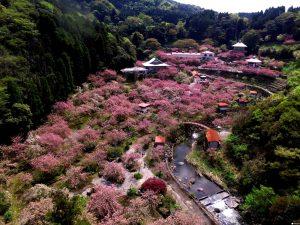 Bukit pemakaman Saitobaru