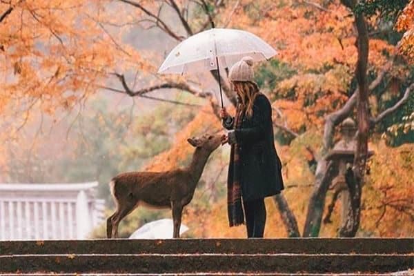 Tempat Wisata Yang Memukau Di Nara Jepang