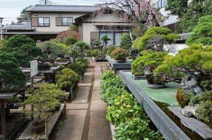 Museum Seni Omiya Bonsai (Saitama-shi)
