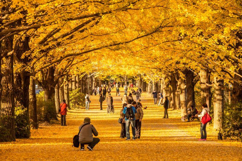 Destinasi Wisata Saat Musim Gugur Di Jepang Yang Romantis
